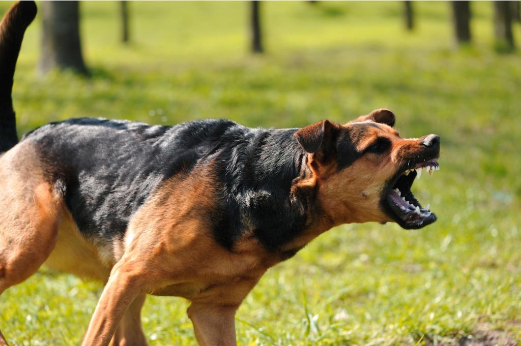"Photo of תושב ר""ג שיסה את כלבו בשכנו, בגלל סכסוך סתמי בין השניים"