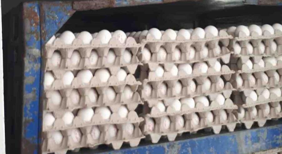 Photo of משרד חקלאות מתגבר את יבוא הביצים. המטרה: להגדיל את כמויות הייבוא עוד לפני ליל הסדר