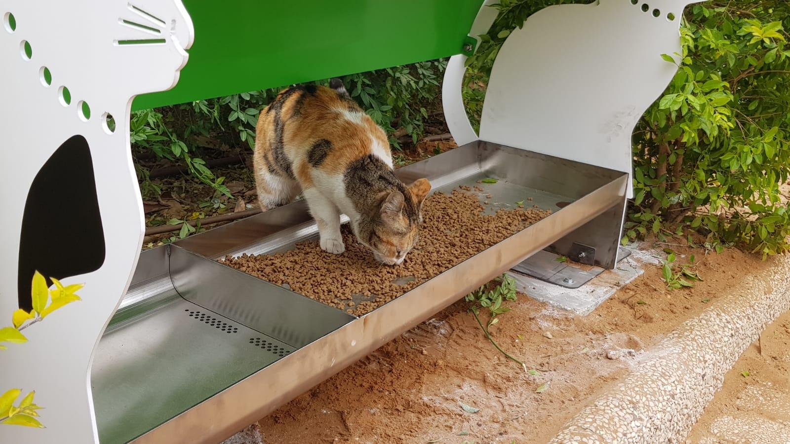 מי מבתר חתולים ויונים ברחובות תל אביב?