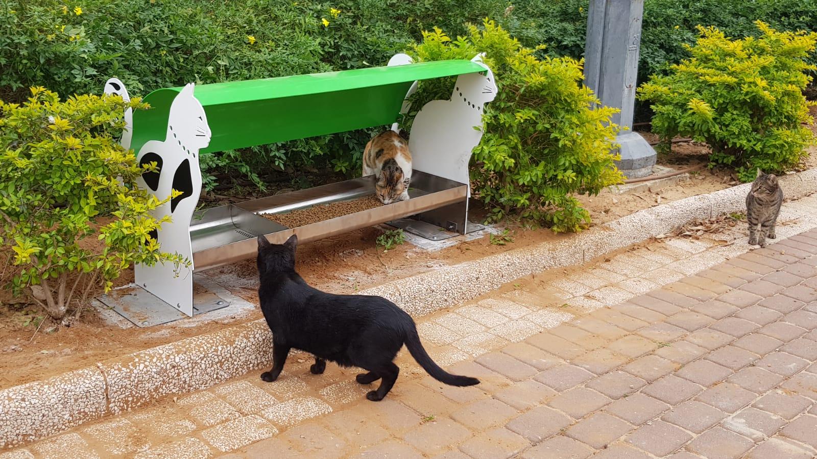"Photo of תחנות ראשונות להאכלת חתולים הוצבו בנאות אשלים וברמב""ם"