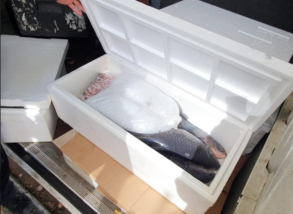 Photo of למה הוזעקה המשטרה להתערב כשנתפס סוחר דגים בחולון, שהוביל 100 קילו למסעדות בתנאי תברואה ירודים?