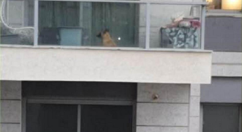 Photo of השאירו את הכלב במרפסת בקומה ה-30 בבת-ים בשיא סערת הגשמים. השכנים התערבו וקראו למשטרה