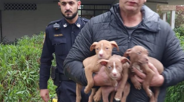 אנשי השיטור העירוני מחלצים את הגורים שהוחזקו בתנאי הזנחה קשים. צילום: עיריית חולון