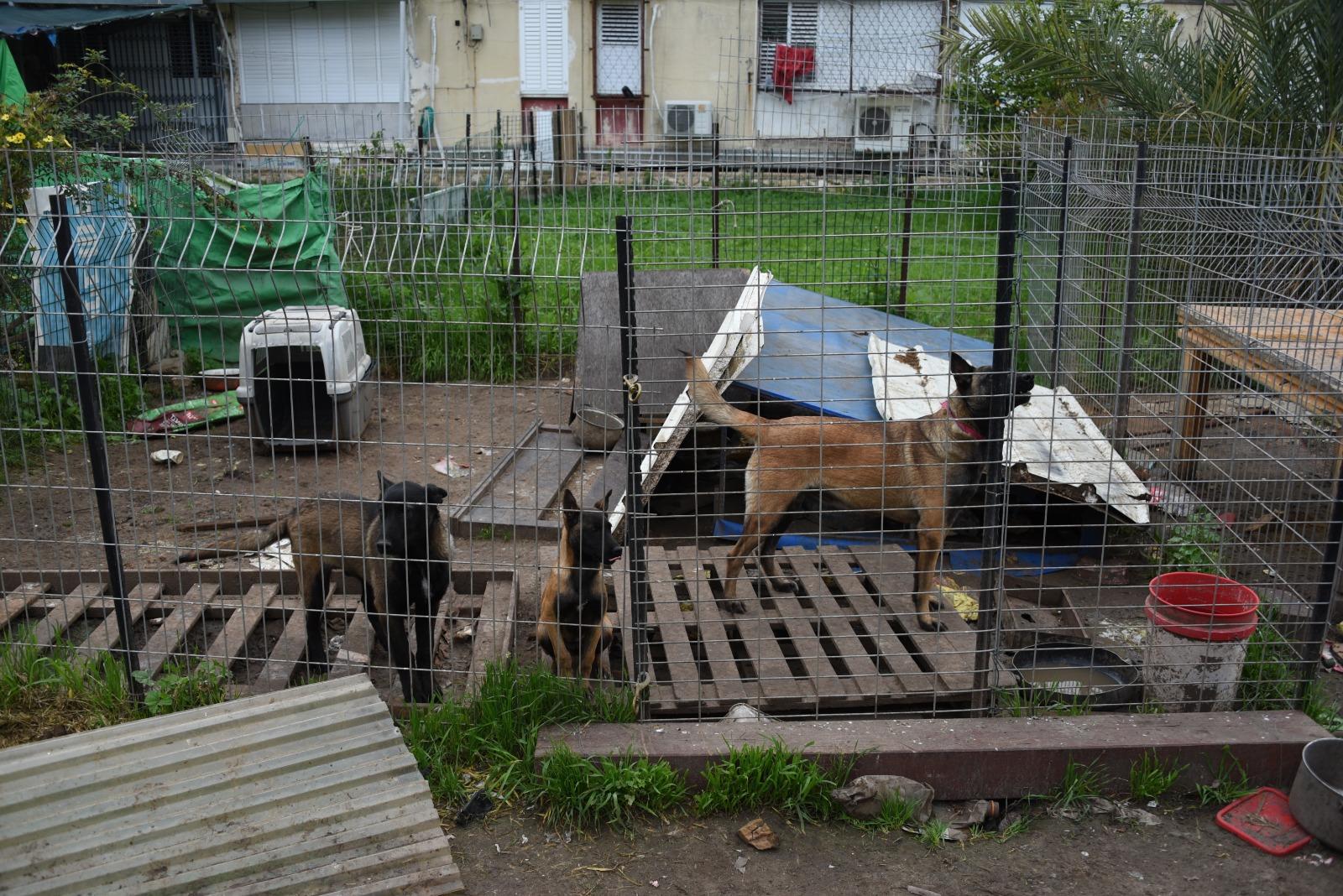"""Photo of פשיטה של השיטור המשולב ברחובות על בתים בהם הוחזקו כלבים בתנאי הזנחה פושעת והתגלו עוד """"הפתעות"""""""