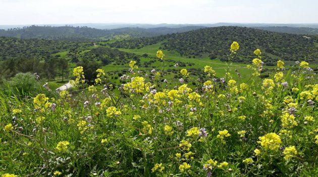 פסטיבל ירוק ולא רחוק: שפלת יהודה צהובה. צילום יחצ