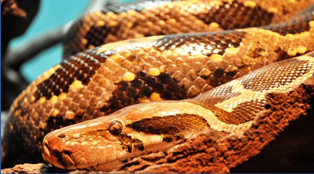 זהירות, עונת הנחשים נפתחה. צילום פיקסביי PIXABAY