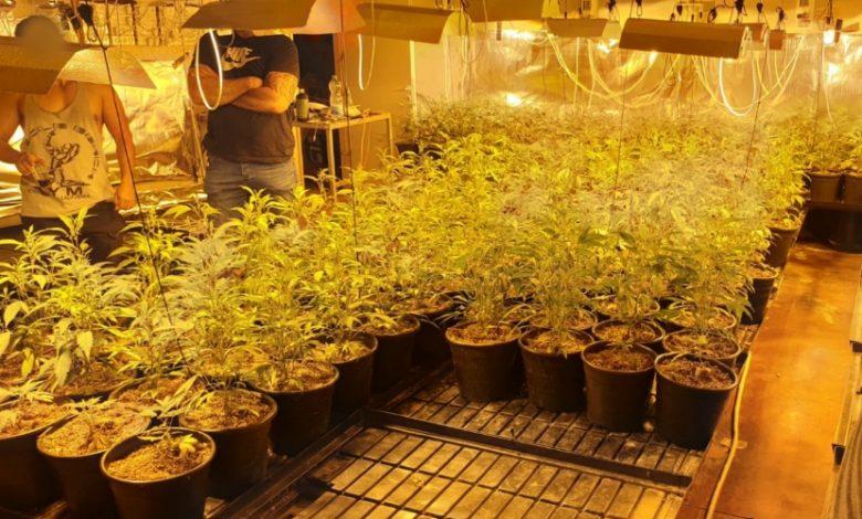 Photo of השוטרים גילו שדירת המגורים ביהוד הפכה למעבדה לגידול סמים עם מאות שתילי מריחואנה