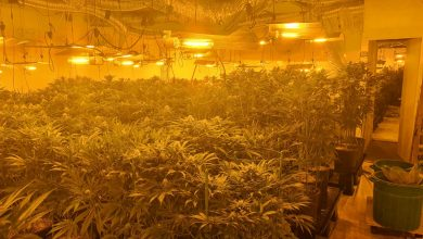 "Photo of פשיטה של מג""ב ושוטרים על בניין משרדים בראשל""צ חשפה חצי טון סמים ומעל 1200 צמחי סם, שגודלו במשרדים"