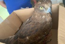 Photo of צער בעלי חיים: בן 30 שגידל עוף דורס נעצר רגע לפני שמכר אותו