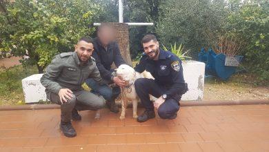 Photo of נעצר לאחר שגנב כלב מתושב השרון וניסה לסחוט ממנו כופר כדי להחזיר אותו