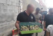 "Photo of רק אחרי תלונות אזרחים, המשטרה פשטה על שוק לממכר חיות בכפר קאסם וגילתה מראות קשים והתעללות בבע""ח"