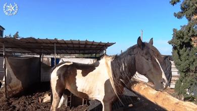 Photo of במבצע משותף לכל רשויות החוק נתפסו כלבים וסוסים בתת תנאים, גז לא חוקי, השתלטות על אדמות ועוד לא מעט הפרות חוק