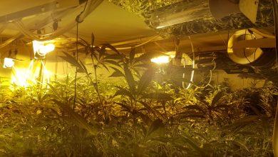 """Photo of תושב נתניה שכר בקיסריה וילה. במקום לגור בה, ניהל בה מעבדת סמים עם עשרות ק""""ג של סמים שנמצאו בה"""