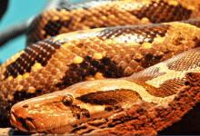 Photo of הקיץ הגיע ואיתו הנחשים: פעוט בן שנתיים הוכש על ידי נחש צפע
