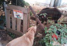 Photo of אושרה קרן סיוע לתושבים בחיפה שיבקשו לגדר שטחים פרטיים מפני חזירי בר. עדיפות תינתן למספר שכונות