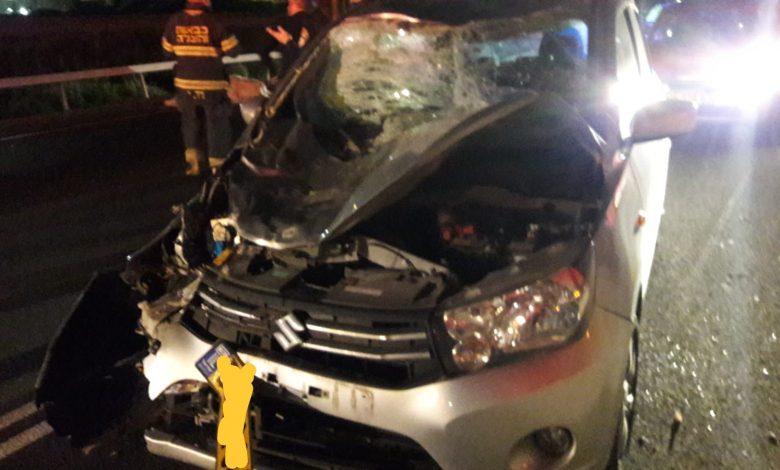 הרכב נפגע קשה, הנוסעים נפגעו בינוני, הפרה נהרגה. צילום: איחוד הצלה