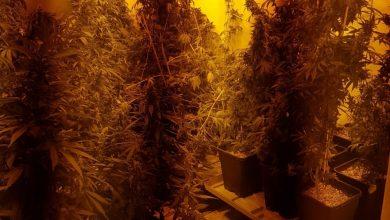 Photo of עוד מעבדת סמים שפעלה מתוך דירה בקריית מוצקין נחשפה אתמול, ובה למעלה מ-100 שתילי סם