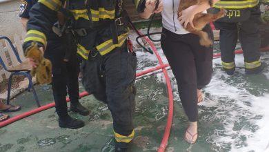 Photo of שריפה בבניין ברחוב אדמונד פלג בחיפה. מהמקום פונו דיירים ובעלי חיים