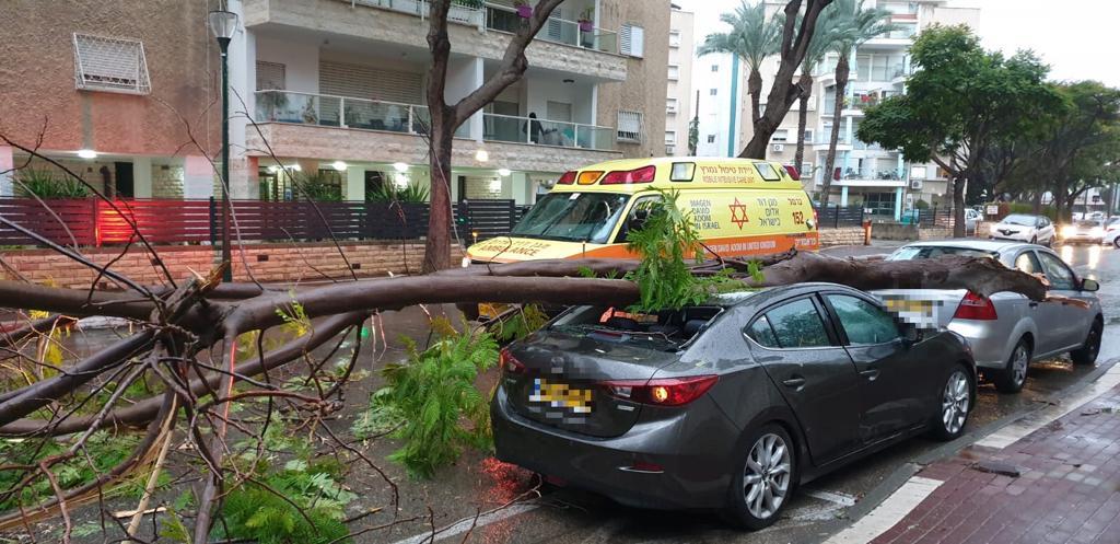 """העץ שקרב על הרכב ונהגו ברחוב הפלמ""""ח בקריית ביאליק. צילום: דוברות מד""""א"""