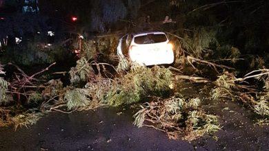 Photo of נגמר בנס: עץ קרס על רכב הלילה ברחוב התעשיה בנשר. כוחות כיבוי חילצו את נהג הרכב שנותר לכוד ויצא ללא פגע