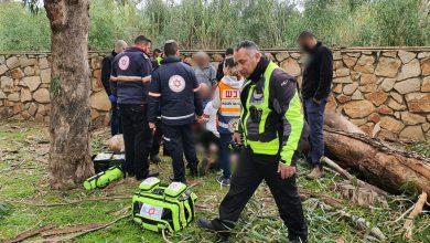 Photo of פועל נפצע מעץ שקרס במהלך עבודת גיזום ברחוב ההדר בנהריה. מצבו בינוני