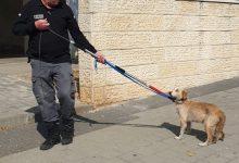 Photo of מבצע אכיפת כלבים משוטטים ואי איסוף צרכים בקרית אתא