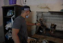 """Photo of תושב חיפה נעצר לאחר שהחזיק עשרות כלבים בתנאים קשים, ב""""מכלאת הרבעה"""". הכלבים חולצו והועברו לטיפול"""