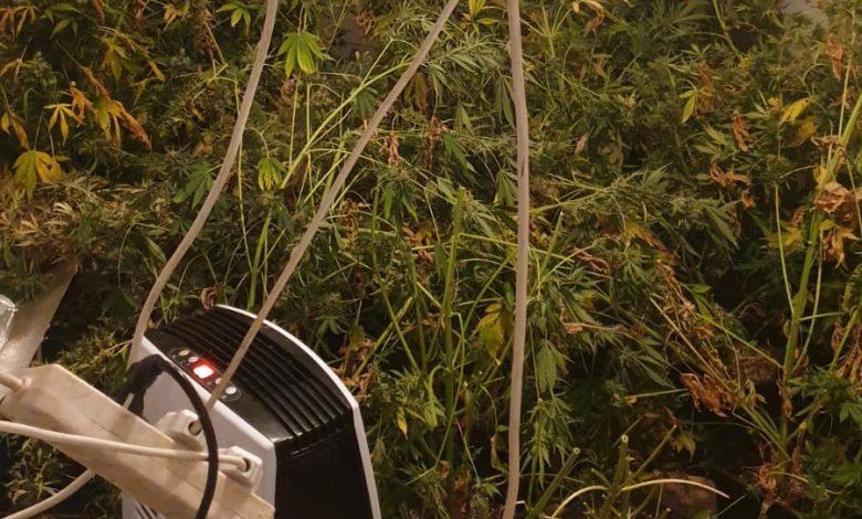 Photo of מעבדת הידרו לייצור סמים ועשרות שתילי סם, נחשפו אמש בדירה בקריית ים. נעצר מפעיל המקום, צעיר תושב העיר